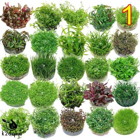 Plants For Aquascaping by Live Aquarium Plants In Vitro Aquatic Tropical Fish