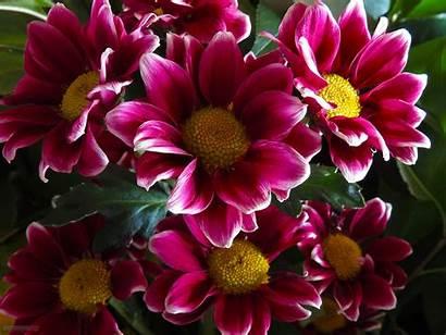 Flowers Desktop Flower Wallpapers Backgrounds Widescreen Pixelstalk