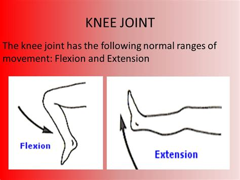bones muscles joints and movement ppt