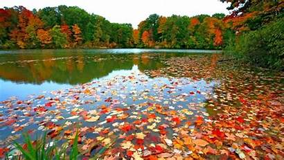 Fall Desktop Autumn Leaves Foliage Wallpapers Backgrounds