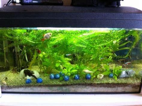 kosten aquarium einrichten 60 l aquarium einrichten und die kosten daf 252 r images frompo