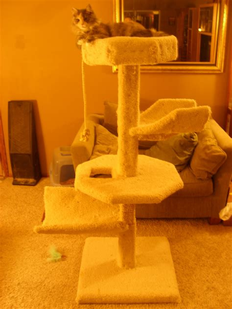 large cat tree condo house