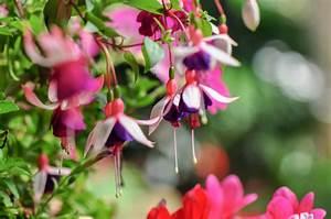 Blumen Für Den Balkon : bildquelle sealstep ~ Lizthompson.info Haus und Dekorationen