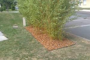 Barrière Anti Rhizome Castorama : barriere anti rhizome barriere anti rhizome maitriser ~ Dailycaller-alerts.com Idées de Décoration