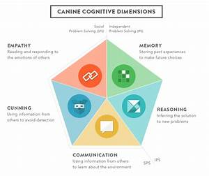 Dognition | Explore The Science