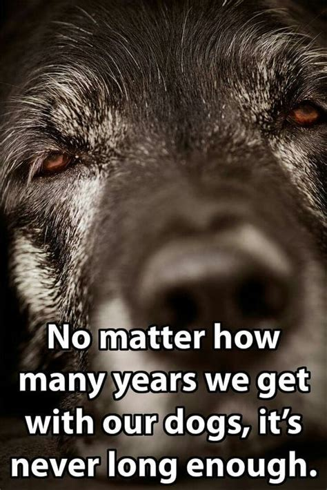 How Many Years Do I Include On My Resume by Quot No Matter How Many Years We Get With Our Dogs It S Never