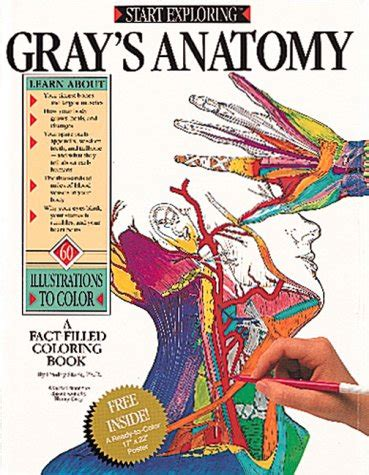 Coloring Atlas Of Human Anatomy by Anatomy Color Book Free Filemj