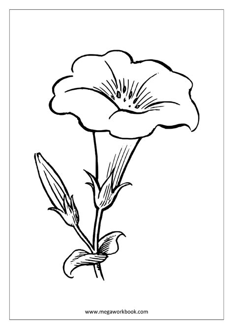 coloring pages trees plants and flowers eskayalitim