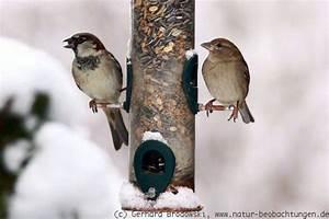Vögel Füttern Ab Wann : vogelf tterung im winter sommer v gel ganzj hrig f ttern natur beobachtungen ~ Frokenaadalensverden.com Haus und Dekorationen