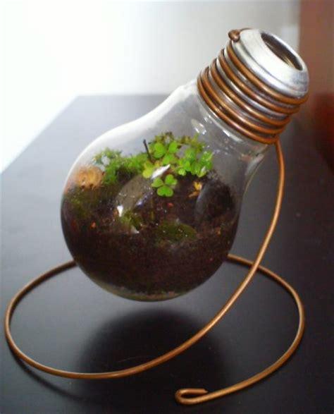 light bulb terrarium ten planters created from light bulbs