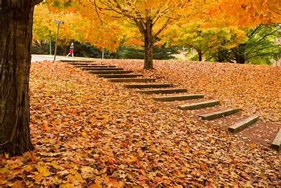 Fall Foliage Parents Wfu Edu Students