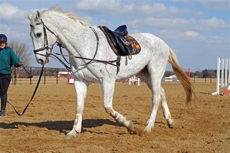 horse training stock images   royalty