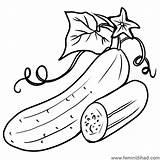 Cucumber Coloring Drawings Printable Leaf Lovesmag Vegetable Sheet Sheets Coloringfolder Cartoon sketch template