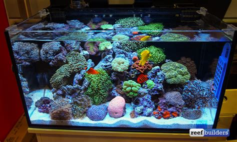 new accessories and upgrades make innovative marine tanks even more desirable aio aquarama