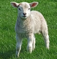 convertisseur de cuisine ingrédient agneau