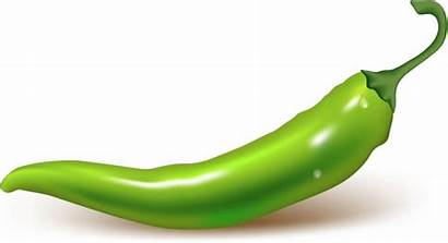 Pepper Chili Vector Graphic Peppers Chilly Commercial