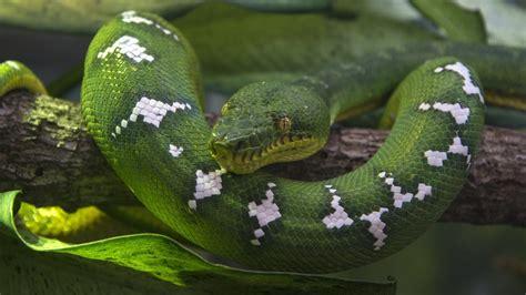 scientific    snake referencecom