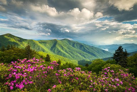 asheville nc blue ridge parkway spring flowers photograph