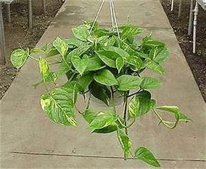 Biljka kao kućni ljubimac Forumi Tvorca Grada