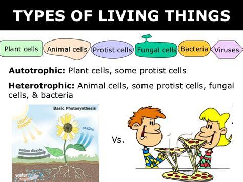 03 6 Kingdoms + Prokaryote & Eukaryote