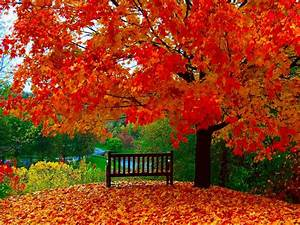 Autumn wallpapers | Autumn Wallpaper - Download The Free ...