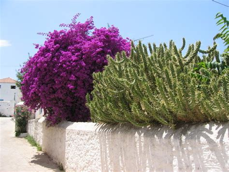 spetses island greece  spetsesdirect summer