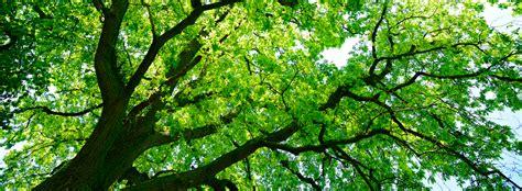 canap tress canopy healthy trees healthy communities canopy