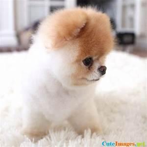 Fluffy pup wallpaper - CuteImages.net