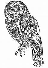 Coloring Owls Simple sketch template