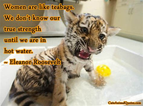 baby animal quotes quotesgram
