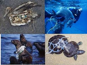 7 Impacts of Plastic Pollution on Marine Environment (part II) Plastic World, Plastic Nightmare