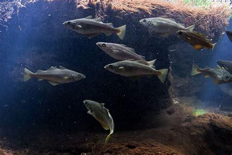 cours de cuisine boulogne sur mer best 20 nausicaa aquarium ideas on
