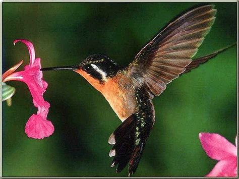 mylife4him humming birds and dragonflies