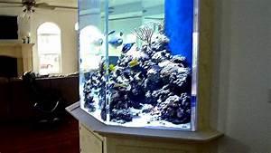 HUGE FISH TANK (Custom 1500 Gallon Coral Reef Aquarium