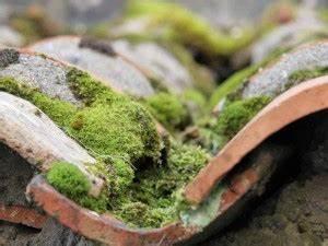Dach Reinigen Kosten : dachreinigung kosten und tipps dein bauguide ~ Michelbontemps.com Haus und Dekorationen