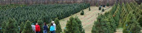 christmas tree farm near me appleron wi dull s tree farm pumpkin patch in thorntown indiana