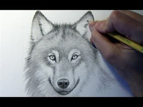 drawing time lapse wolf website  video instructions