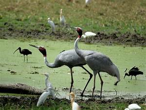 BHARATPUR BIRD SANCTUARY Photos, Images and Wallpapers ...