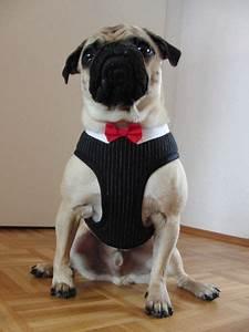 Hunde Sachen Kaufen : hund geschirr softgeschirr gentleman mit fliege f ein designerst ck von chaoscouture ~ Watch28wear.com Haus und Dekorationen