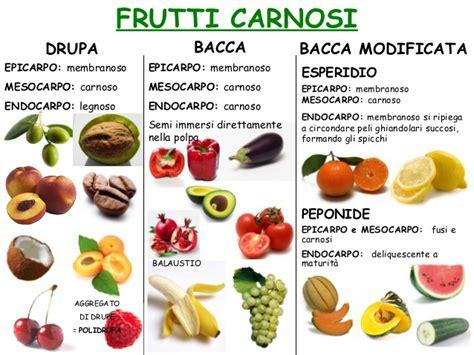 tipi di fiori elenco i tipi di frutti carnosi nelle piante elenco riassuntivo