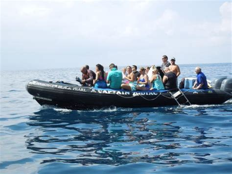 Zodiac Boat Hawaii by Playful Dolphins Picture Of Captain Zodiac Raft