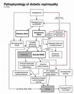Chronic Kidney Disease  Ckd