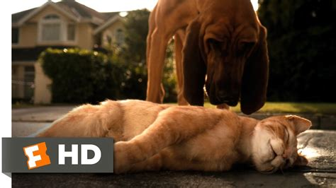 cats dogs   clip catnapped  hd