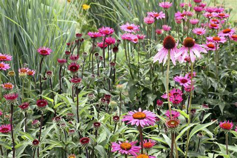 when do perennials return long blooming perennial flowers