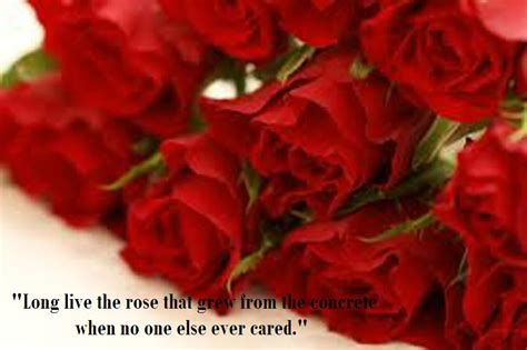 latest  beautiful red rose pictures  romantic love