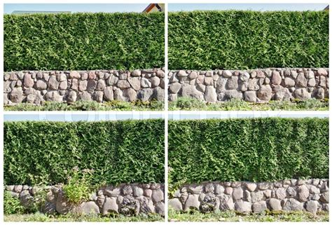 immergrüne bepflanzungen am gartenzaun four fragments of a rural fence hedge from evergreen