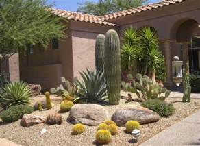 decorating yard with a variety of desert plants