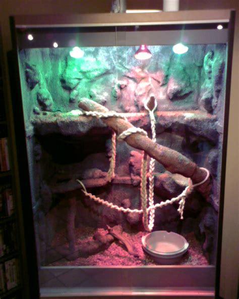 boa constrictor terrarium