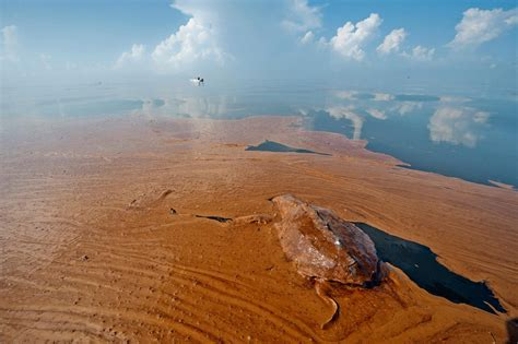 gulf spill quot not quot dolphins turtles dying in record numbers