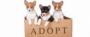 are you ready 5 things to know before adopting a dog With adopting a new dog